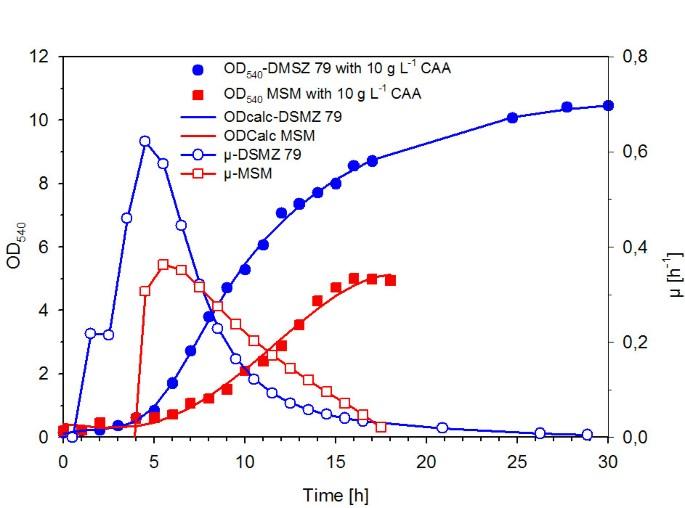 Fed-batch process for the psychrotolerant marine bacterium