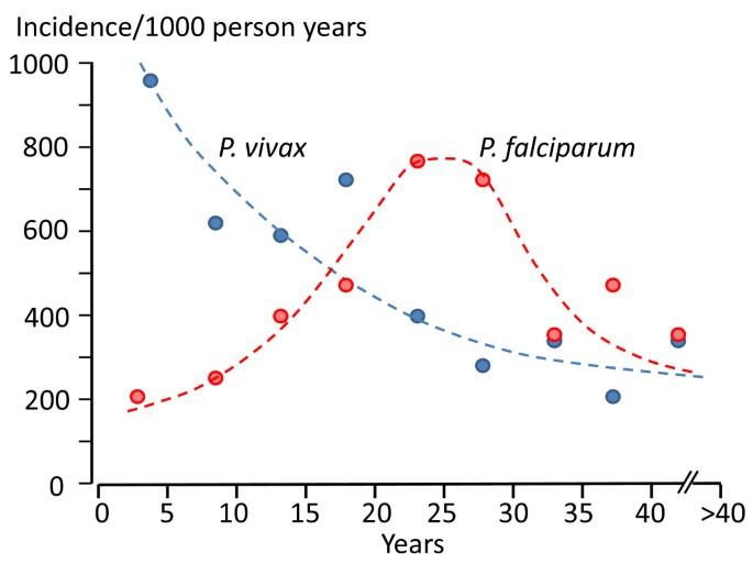 Determinants of relapse periodicity in Plasmodium vivax malaria
