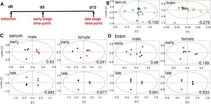 Alterations in urine, serum and brain metabolomic profiles