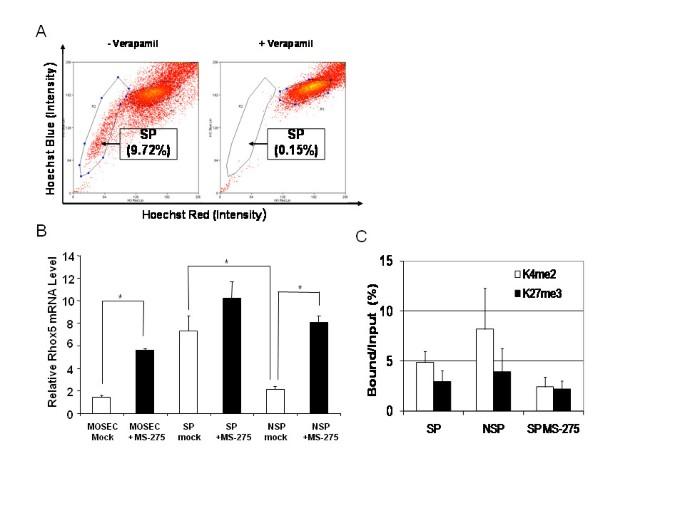 Homeobox gene Rhox5 is regulated by epigenetic mechanisms in