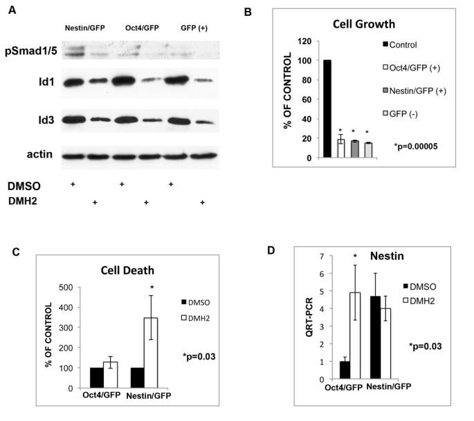Small molecule antagonist of the bone morphogenetic protein type I