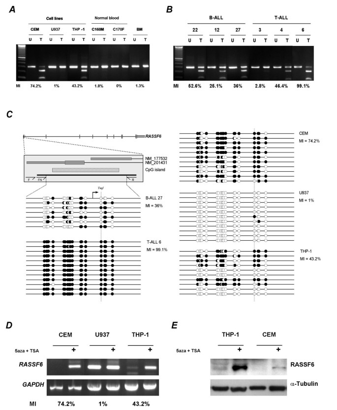 The novel RASSF6 and RASSF10 candidate tumour suppressor
