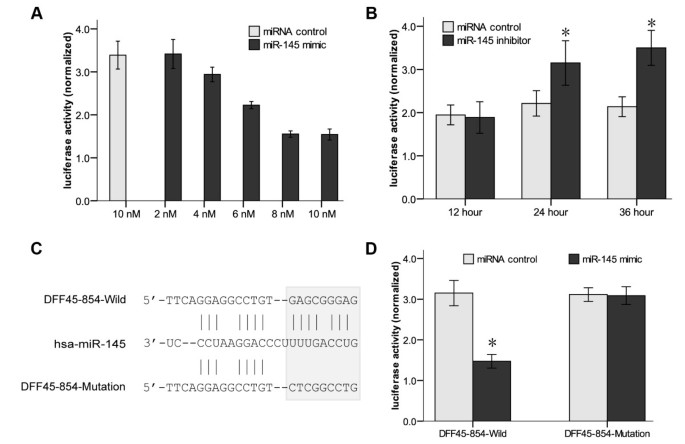 MiR-145, a new regulator of the DNA Fragmentation Factor-45
