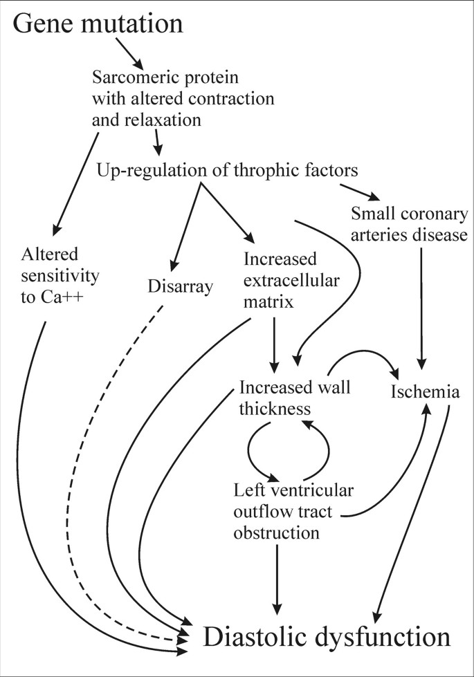 Echocardiography in patients with hypertrophic
