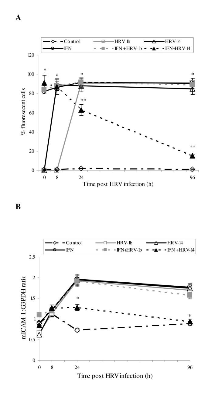 IFN-gamma regulation of ICAM-1 receptors in bronchial