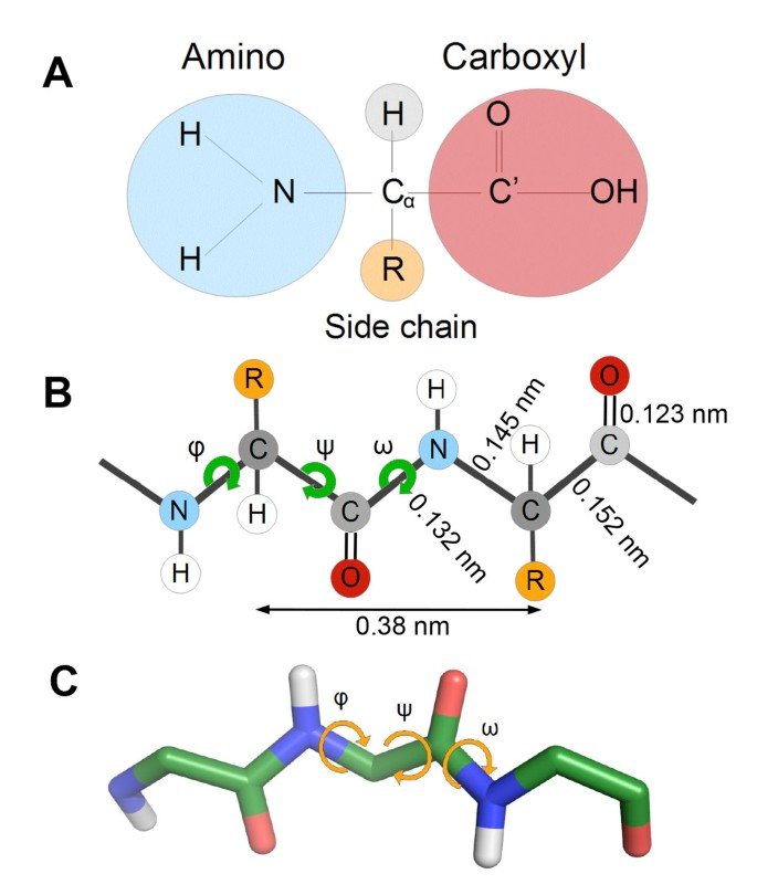 Mechanics of proteins with a focus on atomic force