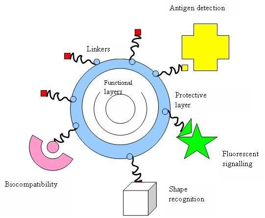 Applications of nanoparticles in biology and medicine
