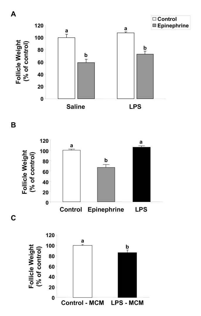 Bacterial lipopolysaccharide induces apoptosis in the trout