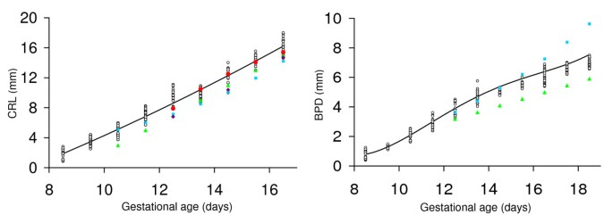 In vivo quantification of embryonic and placental growth