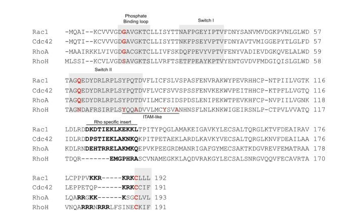 The small GTPase RhoH is an atypical regulator of