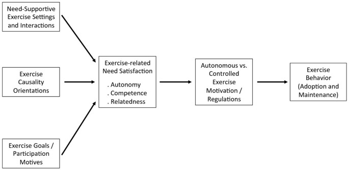 exercise physical activity and self determination theory a  adapted from the general health process model ref ryan et al europ health  psych  this graph includes the  groups of variables analyzed in