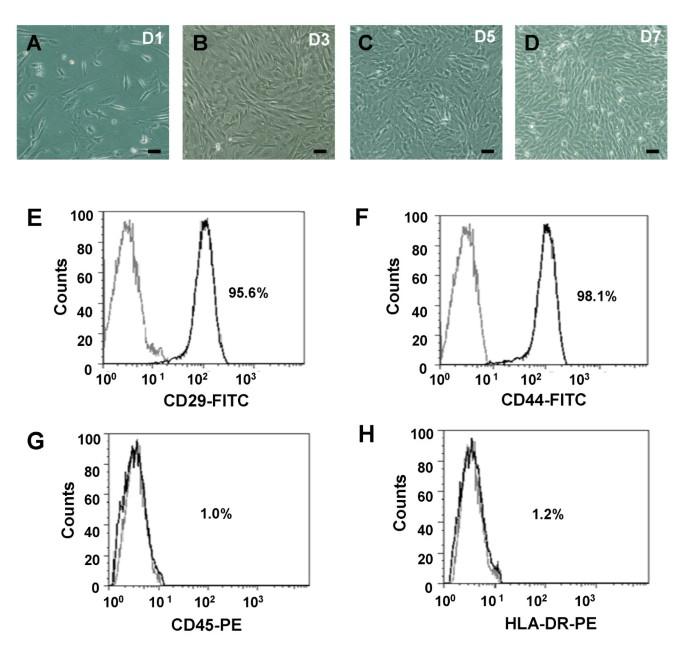 Suppression of zinc finger protein 467 alleviates osteoporosis