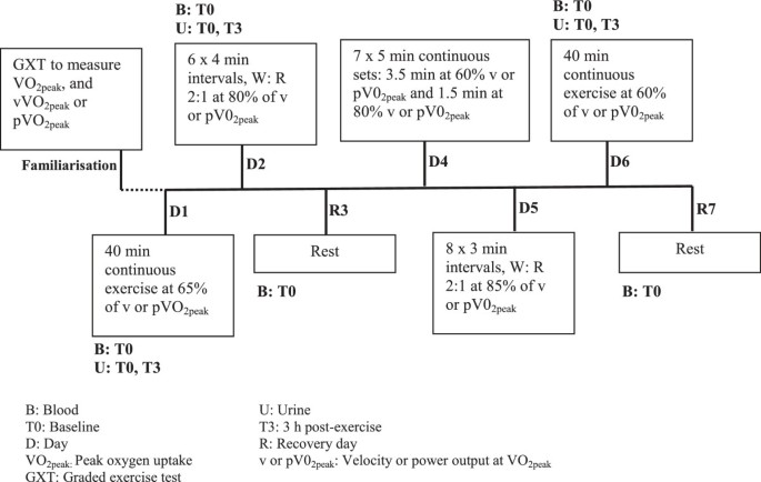 A seven day running training period increases basal urinary ...