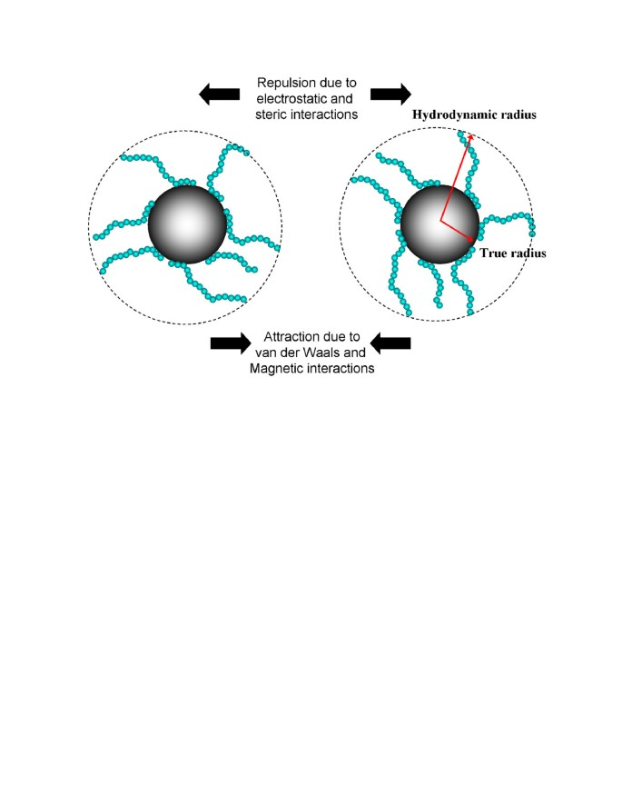 Characterization of magnetic nanoparticle by dynamic light