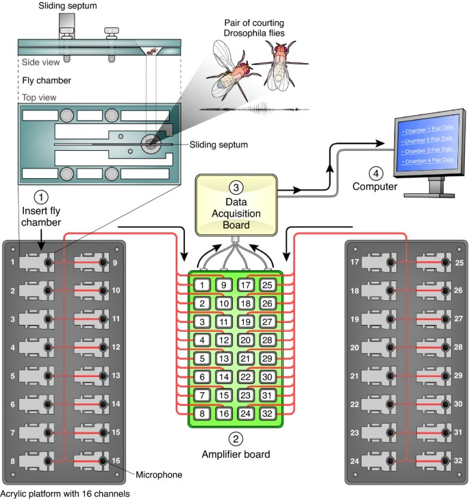 Multi-channel acoustic recording and automated analysis of