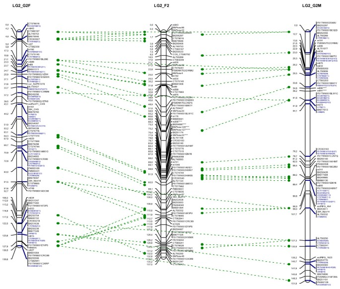 High-density linkage mapping in a pine tree reveals a genomic region