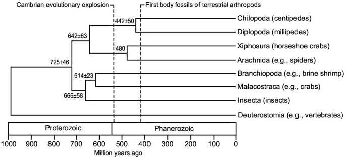 The colonization of land by animals: molecular phylogeny and