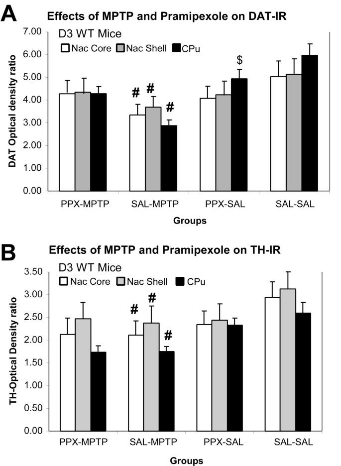 Low dose pramipexole is neuroprotective in the MPTP mouse model of