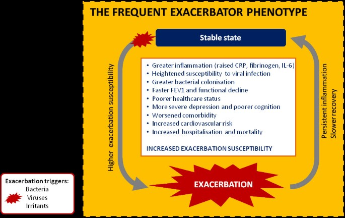 Mechanisms and impact of the frequent exacerbator phenotype in