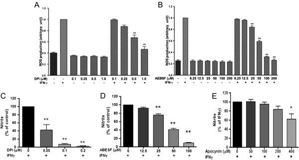 Magnolia polyphenols attenuate oxidative and inflammatory