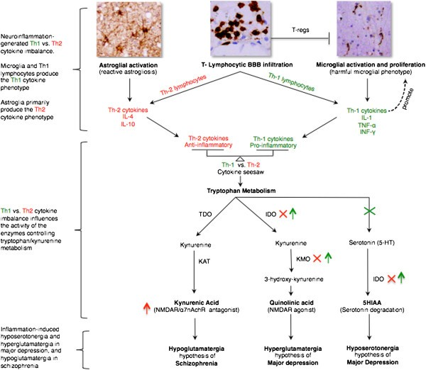 Neuroinflammation and psychiatric illness | Journal of