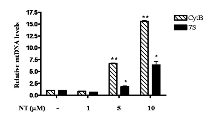 Mitochondrial DNA and anti-mitochondrial antibodies in serum of