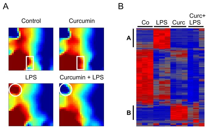 Curcumin is a potent modulator of microglial gene expression