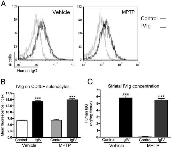 Impact of intravenous immunoglobulin on the dopaminergic