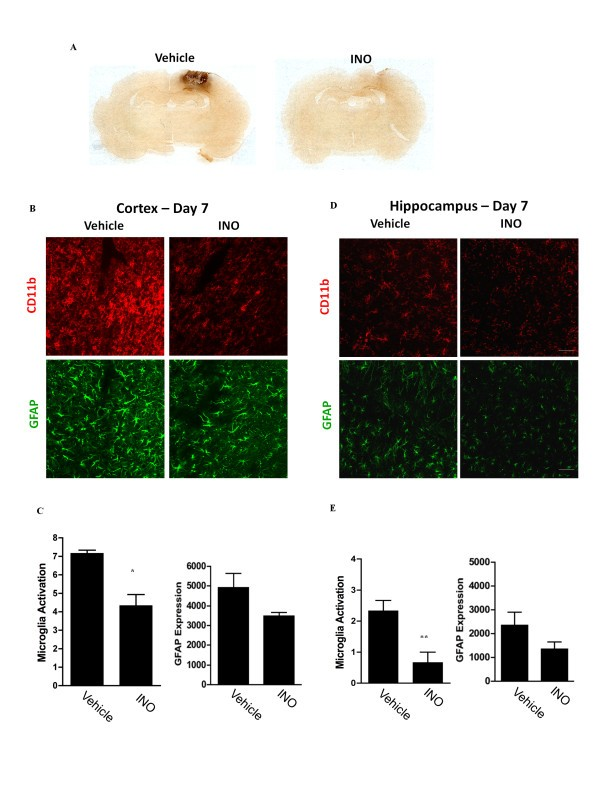 Microglial activation induced by brain trauma is suppressed
