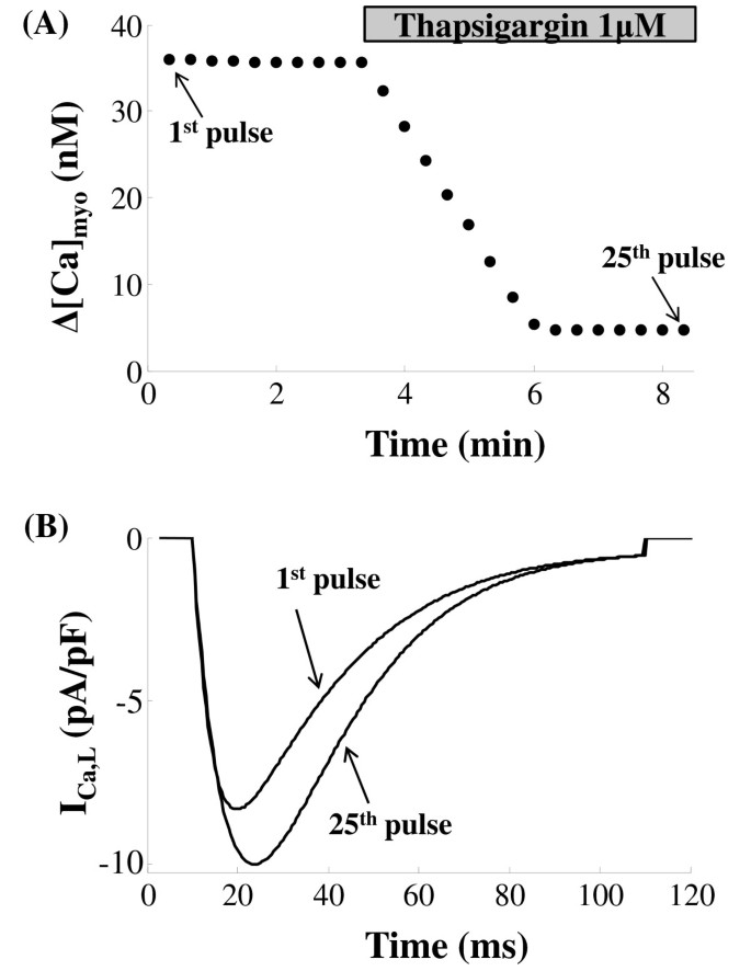 Modeling CICR in rat ventricular myocytes: voltage clamp studies