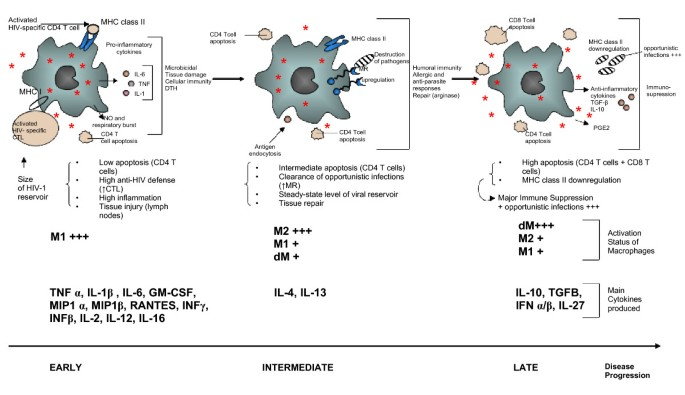 The macrophage in HIV-1 infection: From activation to