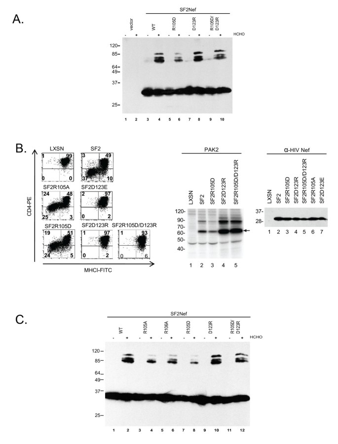 Self-association of the Lentivirus protein, Nef
