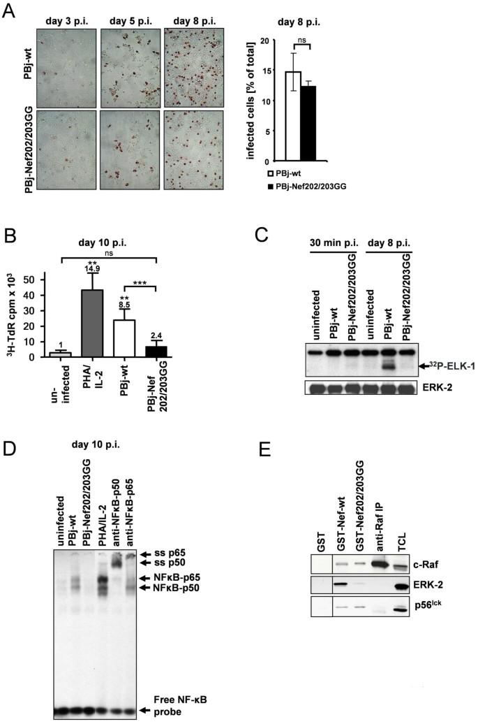 Mutation of a diacidic motif in SIV-PBj Nef impairs T-cell