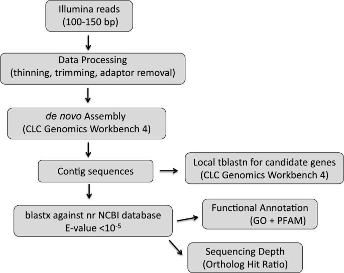 Comparative description of ten transcriptomes of newly sequenced