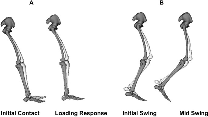 Altering length and velocity feedback during a neuro