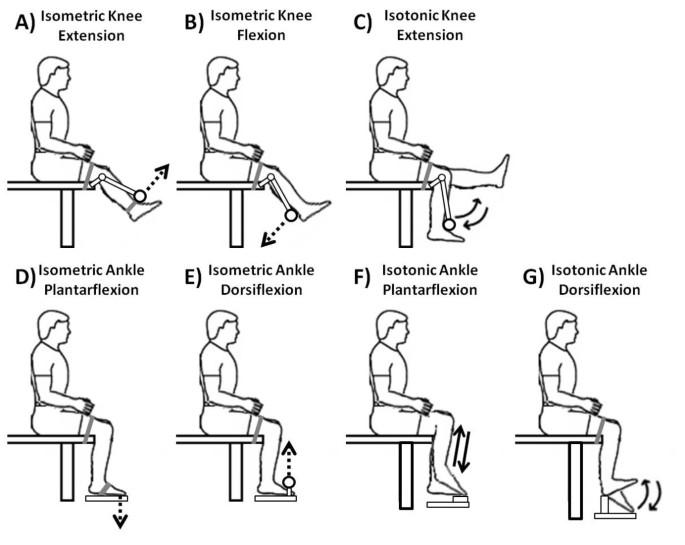 An EEG-based study of discrete isometric and isotonic human