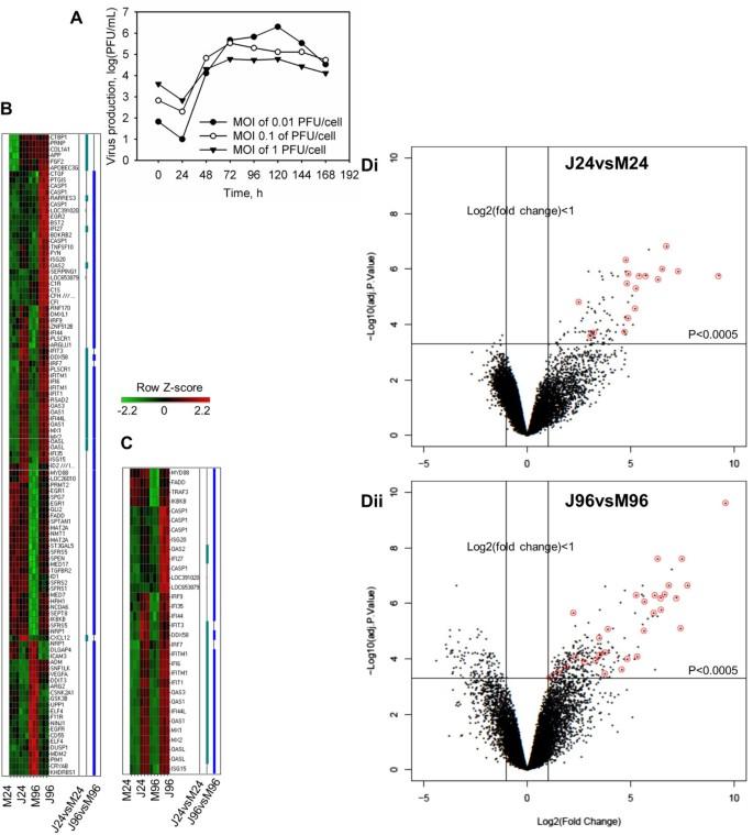 Reactive astrogliosis in response to hemorrhagic fever virus