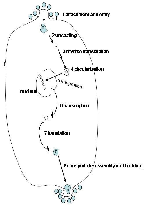 Cytopathic Mechanisms Of Hiv 1 Virology Journal Full Text