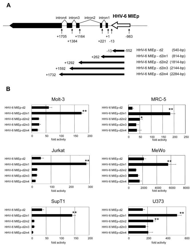 Human herpesvirus 6 major immediate early promoter has