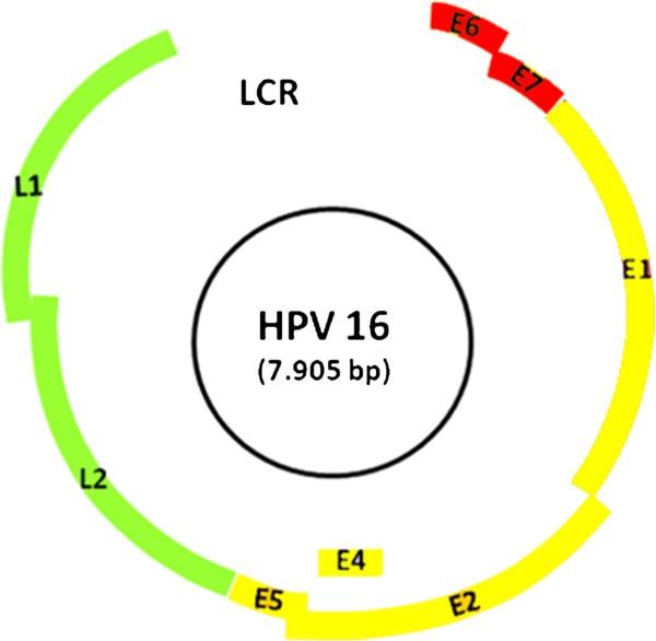 detection papilloma virus