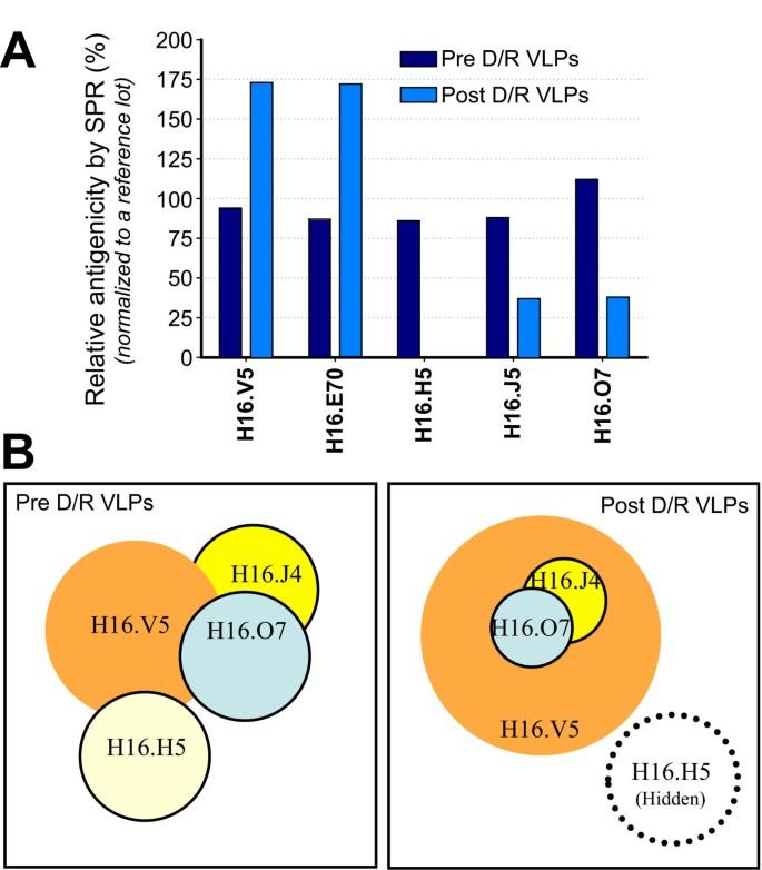 papilloma vírus h16