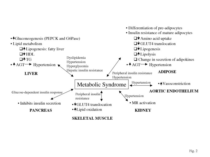 The role of glucocorticoid action in the pathophysiology of the