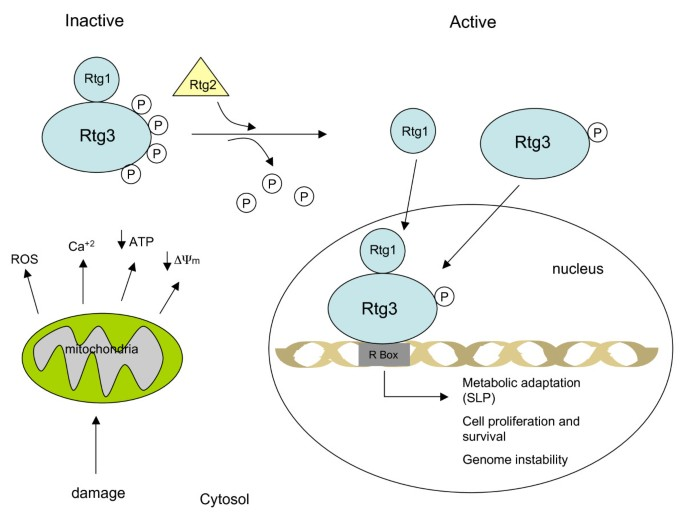 Cancer as a metabolic disease | Nutrition & Metabolism