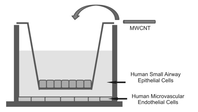 Multi-walled carbon nanotubes induce human microvascular endothelial