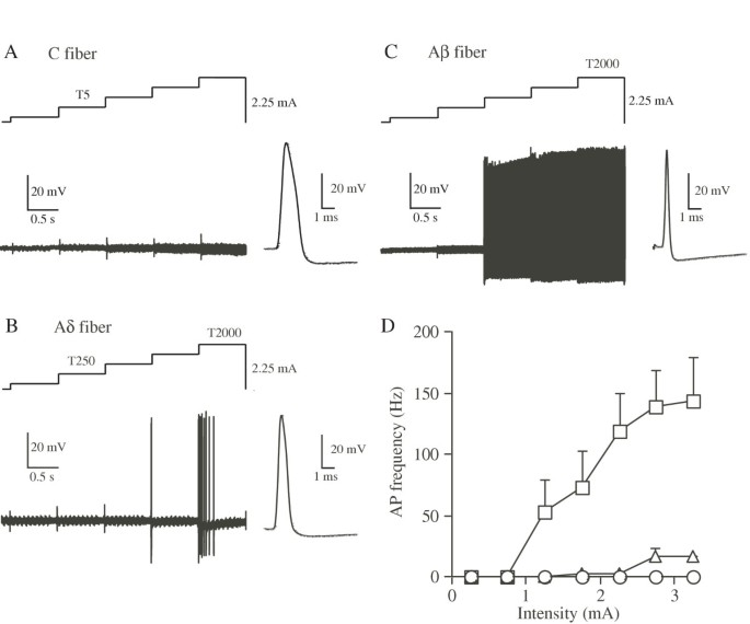 Selective activation of primary afferent fibers evaluated by sine