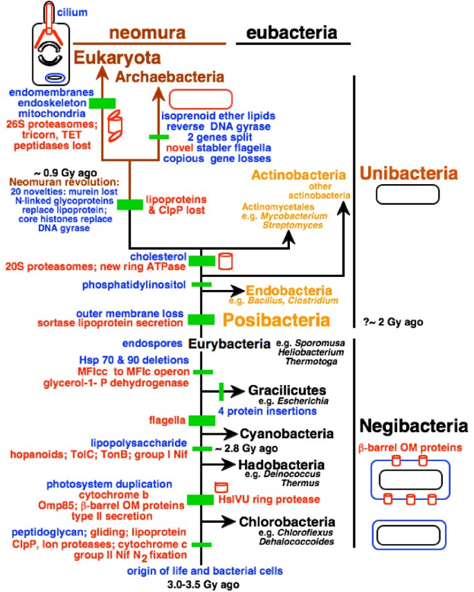 Rooting the tree of life by transition analyses | Biology