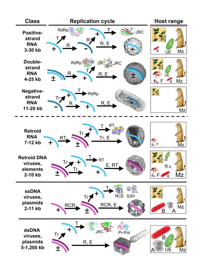 The Ancient Virus World And Evolution Of Cells Biology