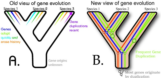The new biology: beyond the Modern Synthesis | Biology