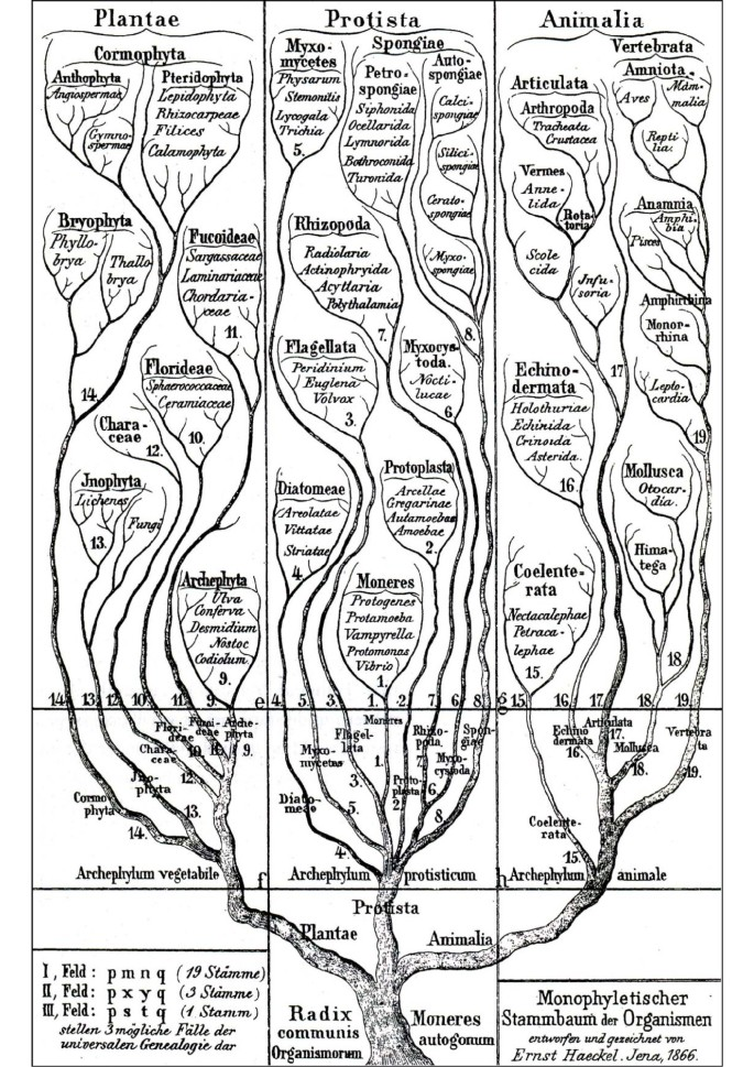 From the scala naturae to the symbiogenetic and dynamic tree of life