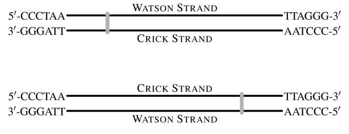 Watson crick strand plus minus betting fixed odds betting football odds